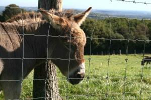 One donkey